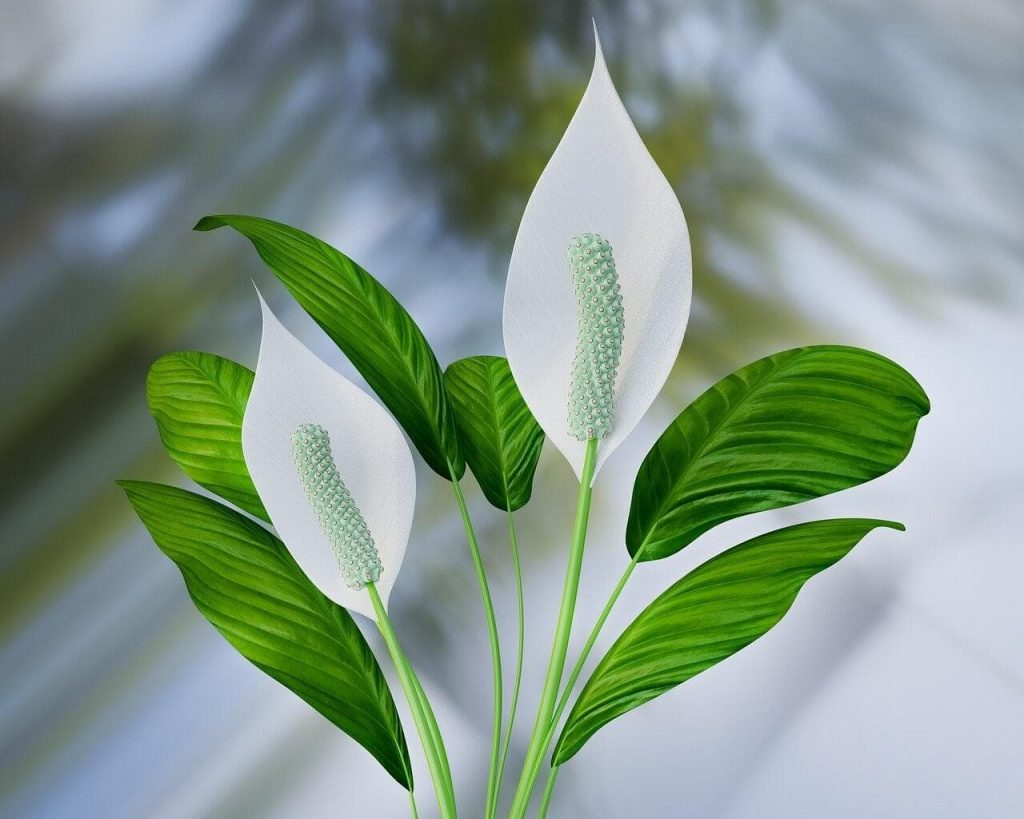 Ultimate Guide to Peace Lily Plant Care