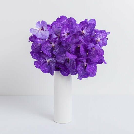 Vanda Orchids for Sale at Ode a la Rose
