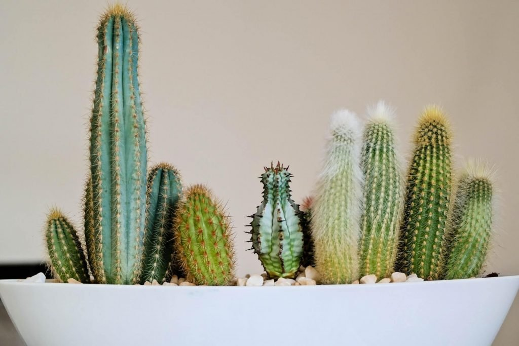 What type of water is best for cactus plants