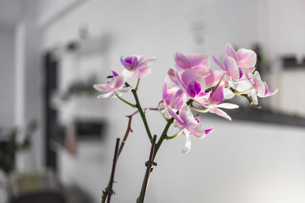 When to Water Orchids