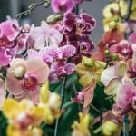 Where to find the best orchids for sale in the USA