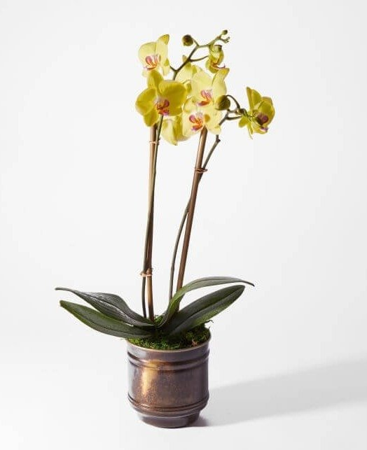 Yellow Orchids for Sale at UrbanStems