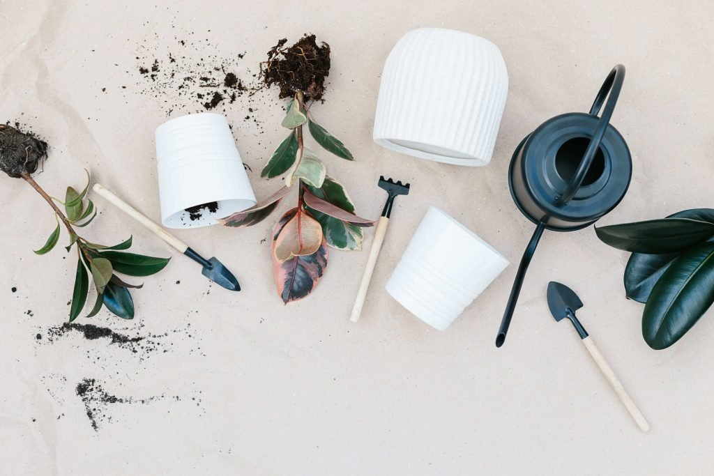 Essential House Plant Tools