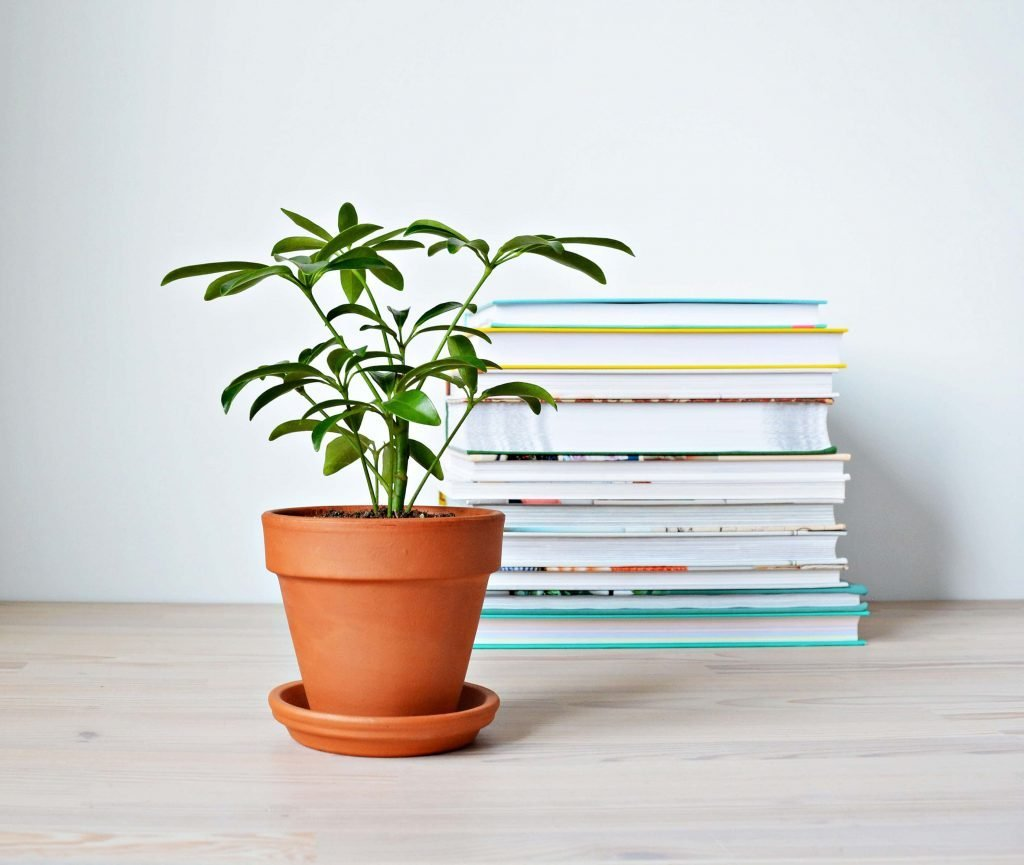 How to Grow Umbrella Plants at Home