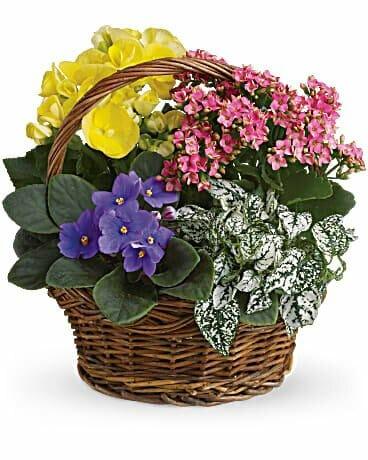 Teleflora-Same-Day-Flower-Basket-Delivery-in-Chicago