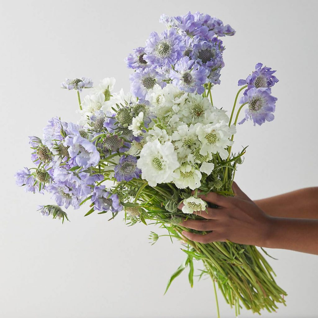 Terrain-Flowers-for-Delivery-in-Indianapolis-IN