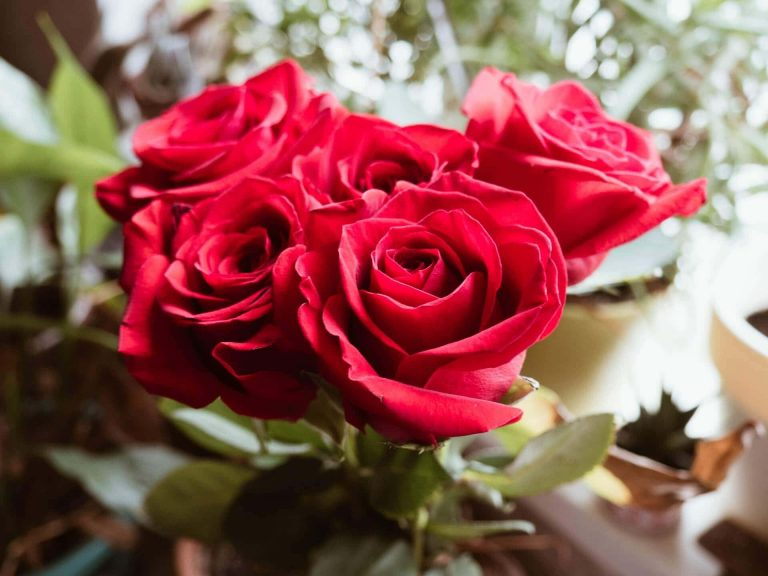 The Best Florists for Roses in Los Angeles California