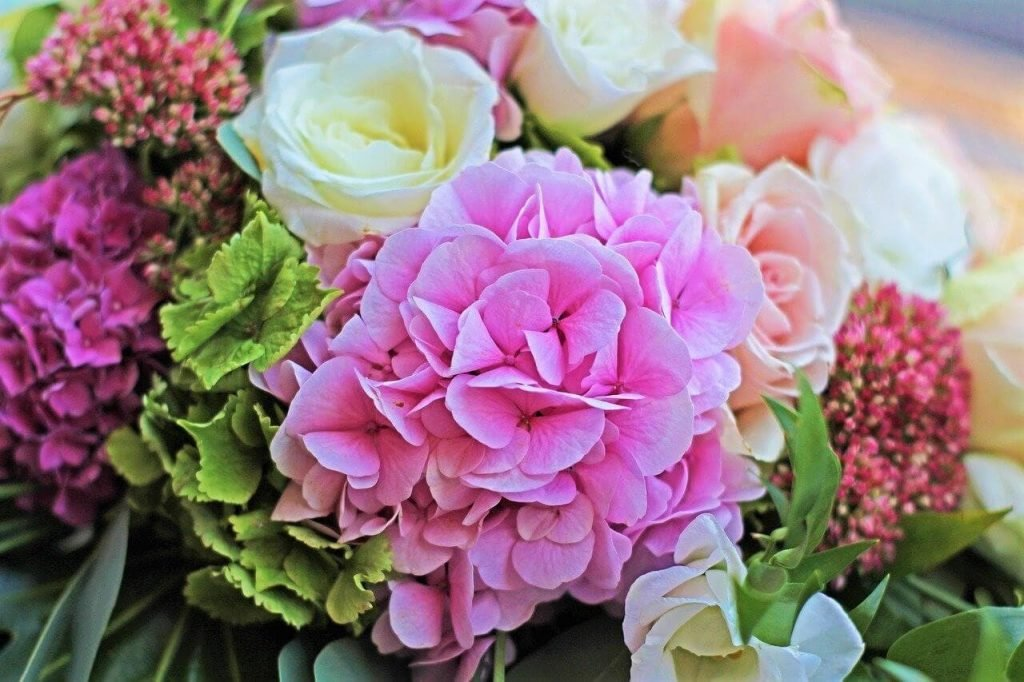The Best Occasions to Gift Hydrangea Flowers