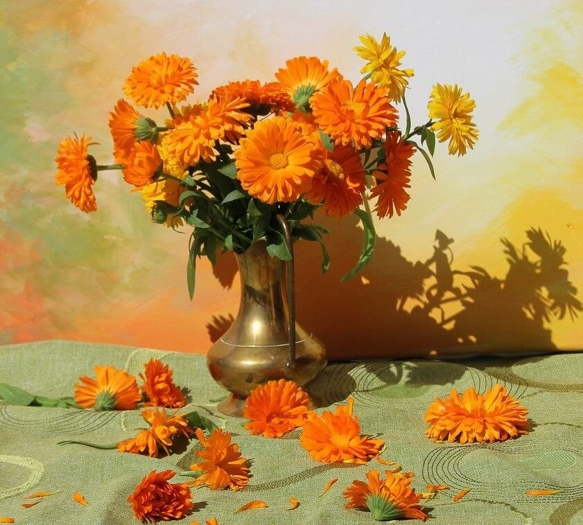 The Best Occasions to Gift Marigold Flowers