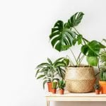 The Best Plant Shops, Garden Centers, and Plant Delivery Services in Dallas Texas