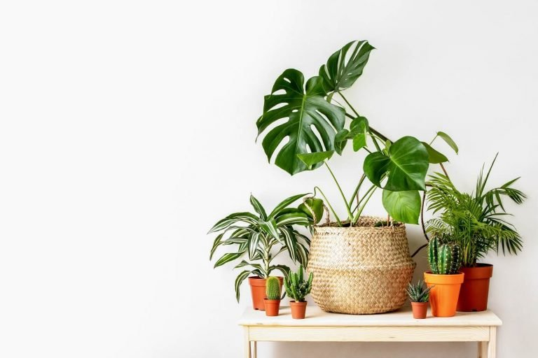 15 Best Plant Shops And Plant Delivery In Dallas Tx Petal Republic