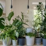 The Best Plant Shops, Garden Centers and Plant Delivery Services in Portland Oregon