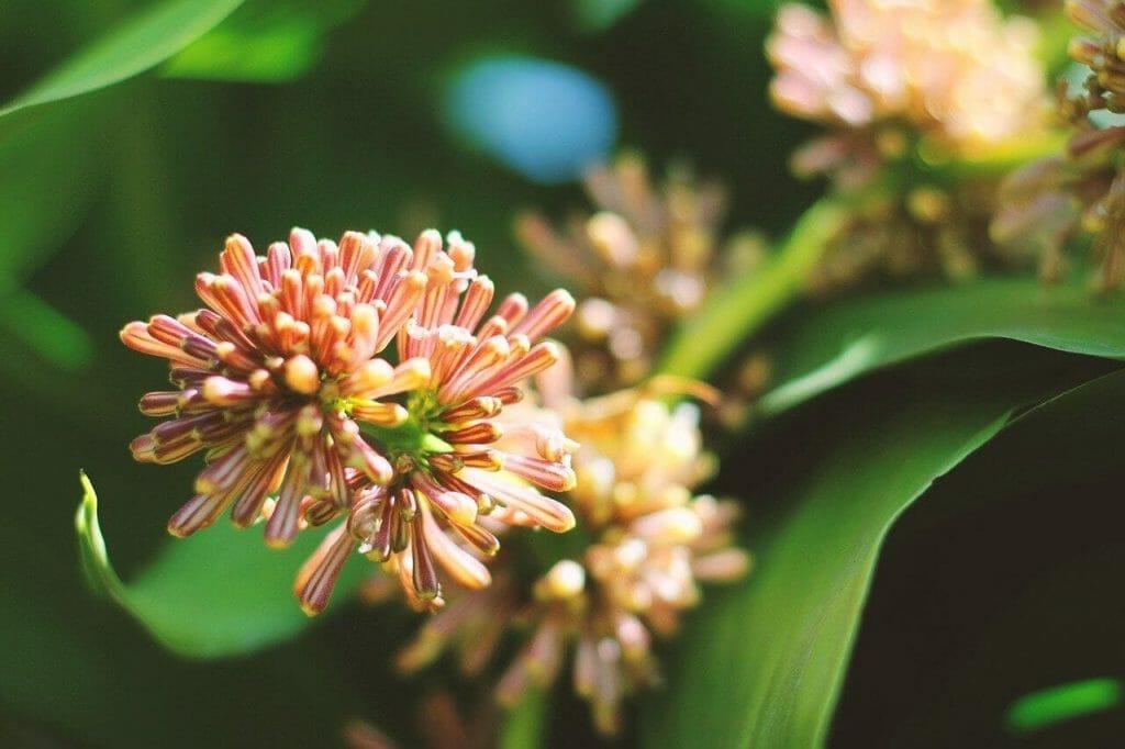 Ultimate Guide to Corn Plant Care