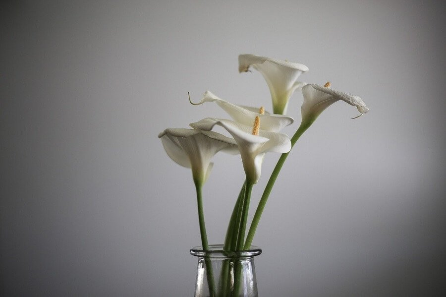 6th Anniversary Flowers - Calla Lilies