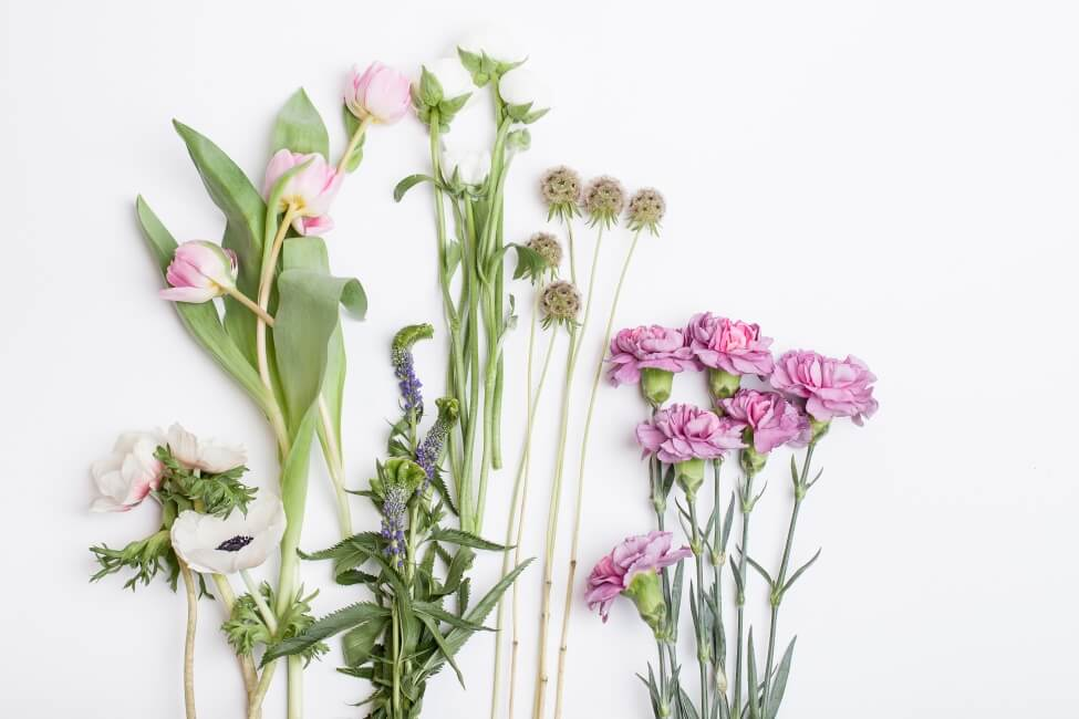 Anemone Cut Flower Care