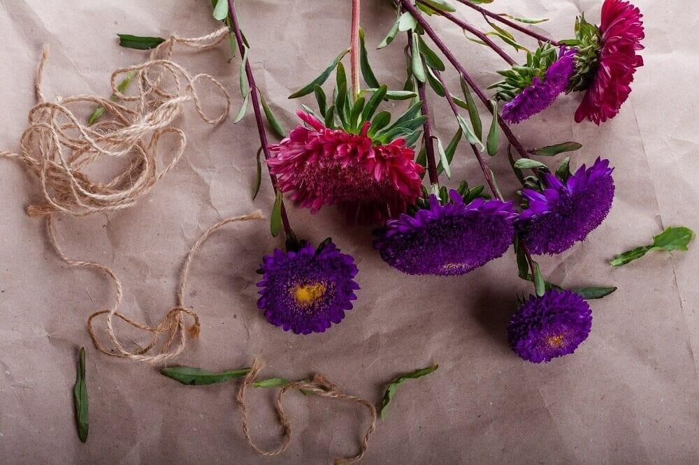 Aster Cut Flower Care