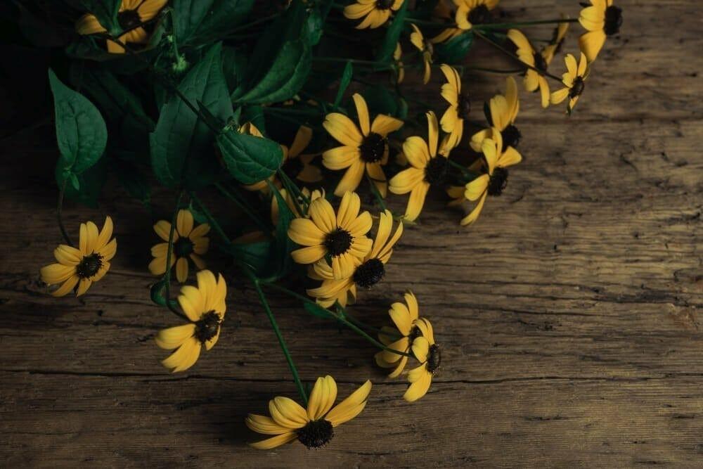 Black-Eyed Susan Cut Flower Care