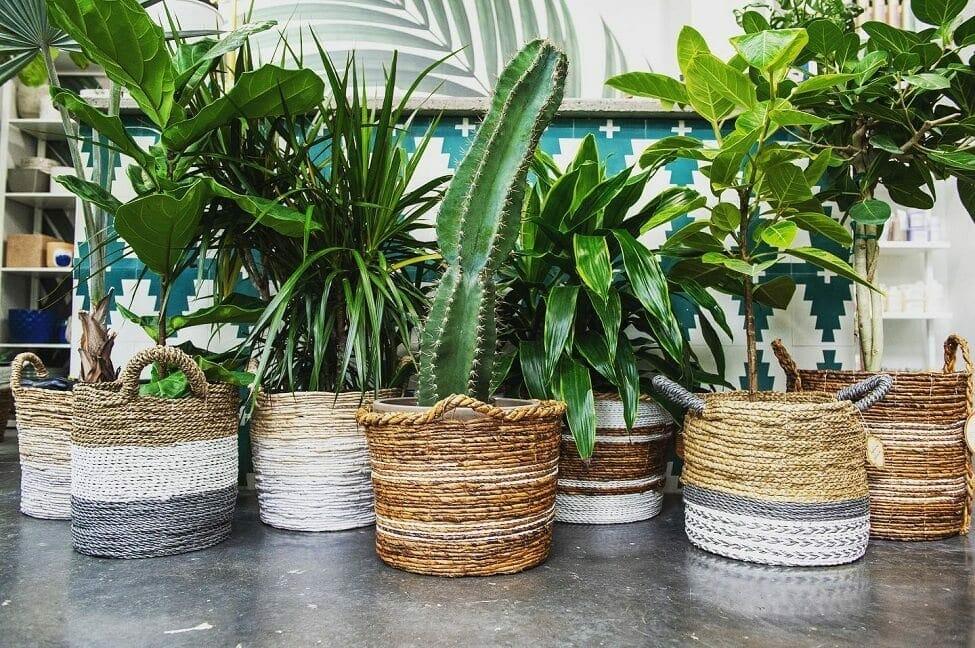 Foiled & Fern Plant Shop in Nashville TN