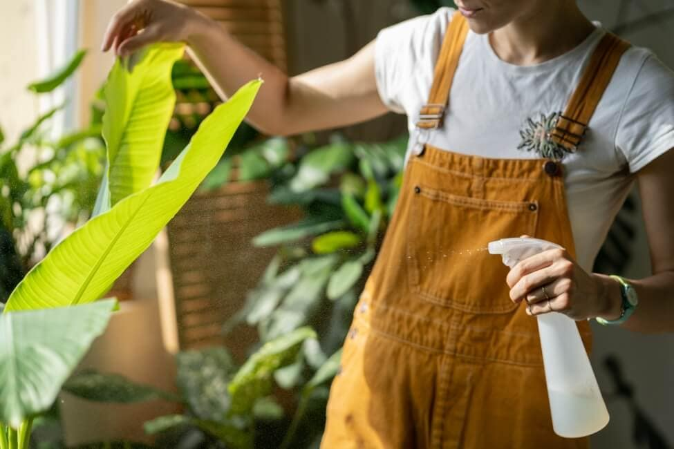 How to Care for Banana Plants at Home