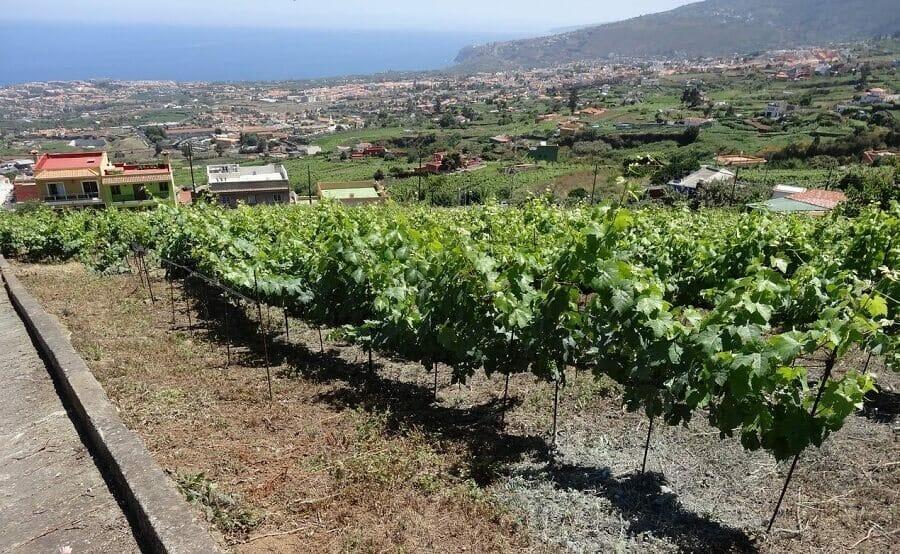 José Pastor Selections Wine Club USA