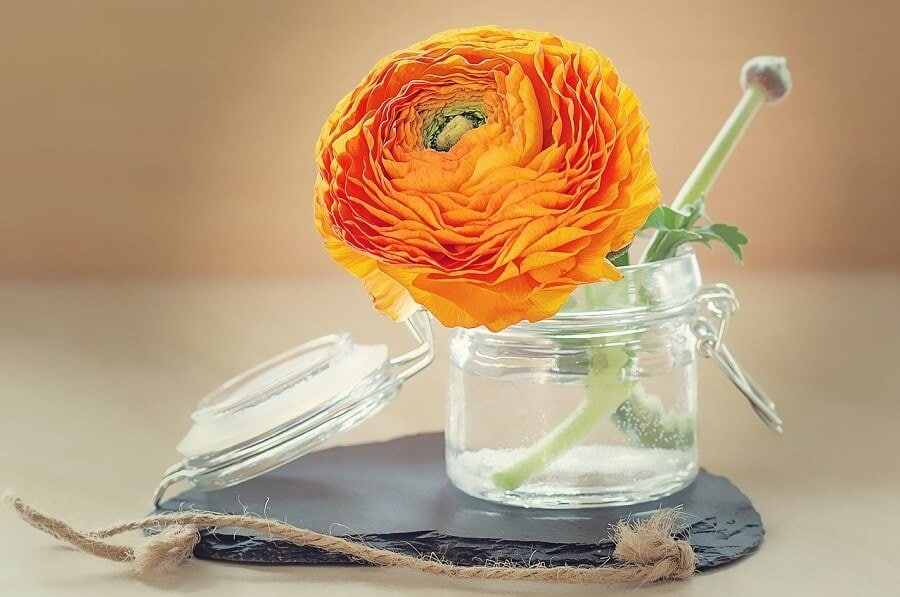 Orange Ranunculus Flower Meaning
