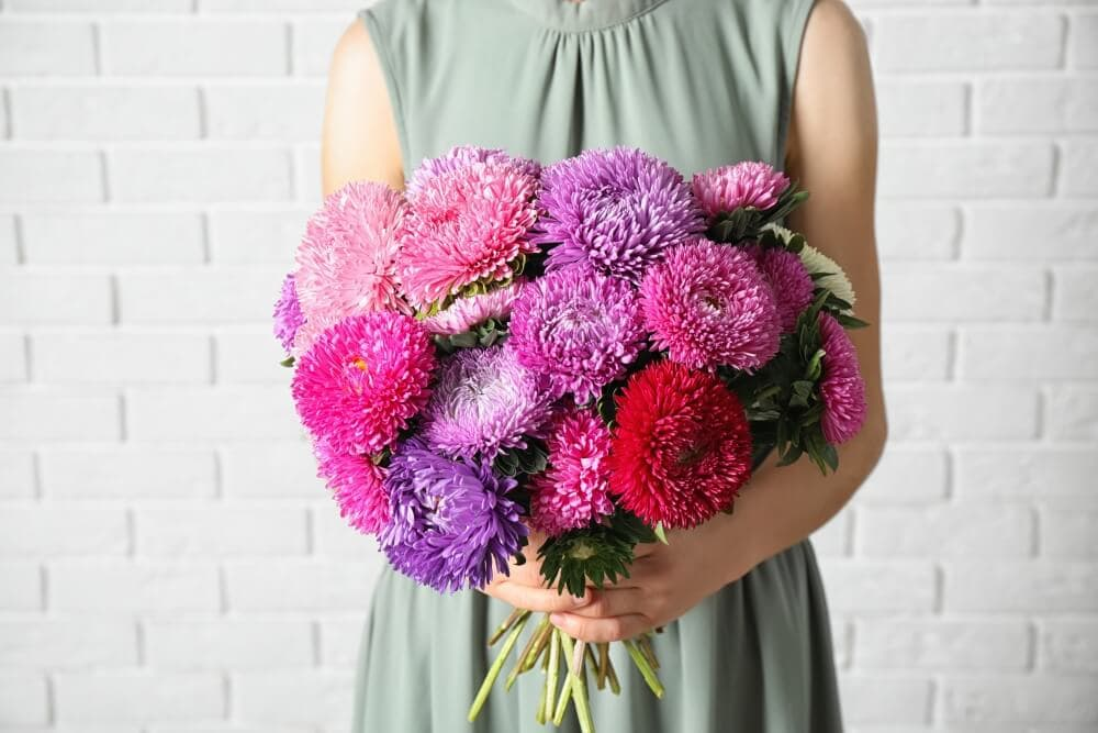 Suitable Gifting Occasions for Aster Flowers