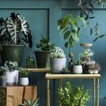 The Best Plant Shops, Garden Centers, and Plant Delivery Services in Nashville, TN