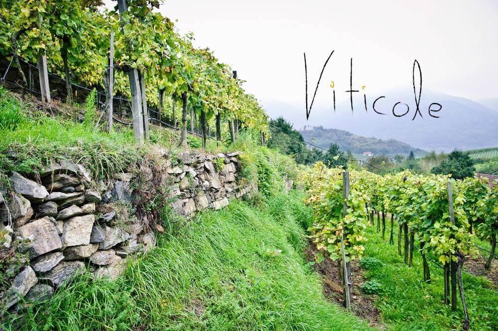 Viticole Wine Club
