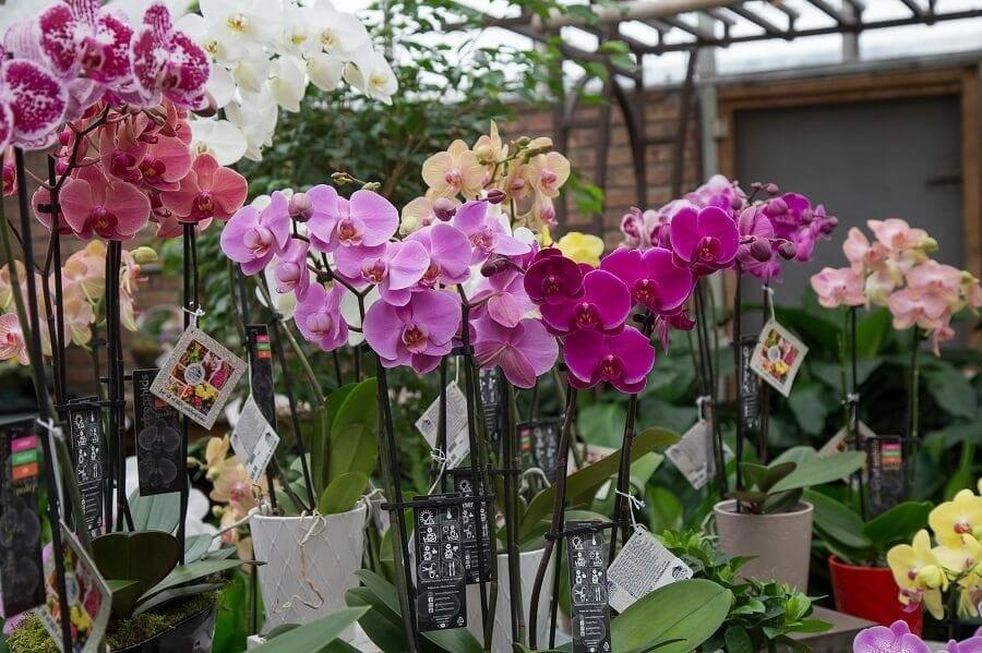 Vivano Flower Shop Detroit, MI