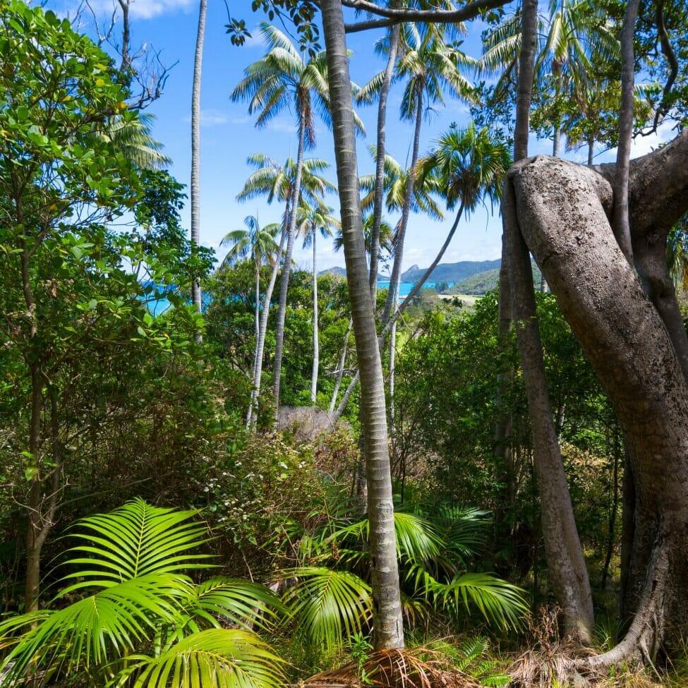 About Kentia Palms