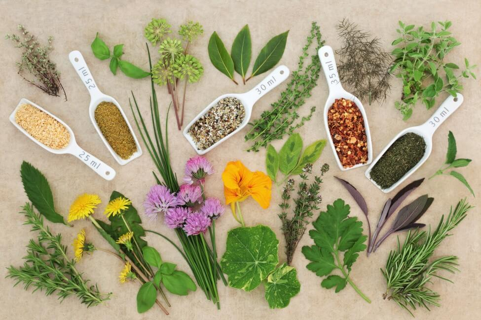 Angelica Flowers in Food and Drink