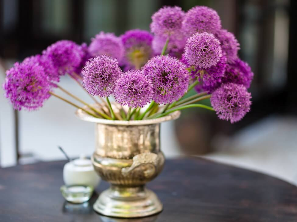 How to Care for Fresh-Cut Allium Flowers