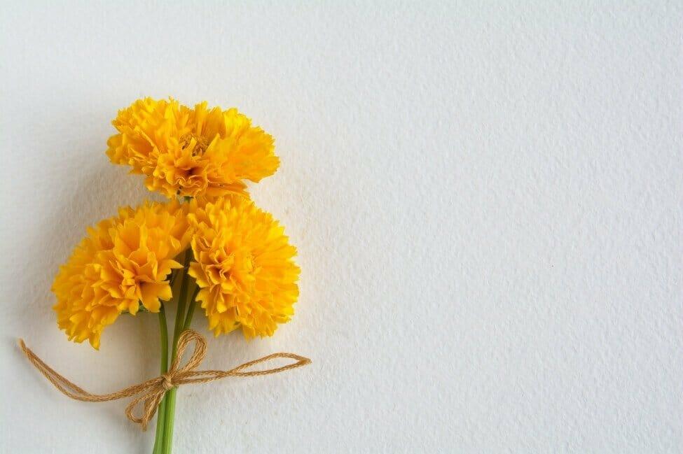 How to Make Fresh Cut Coreopsis Flowers Last Longer