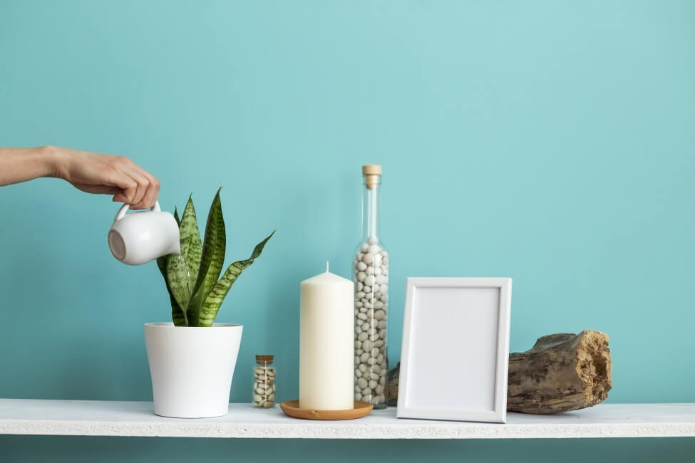 How to Water Snake Plants