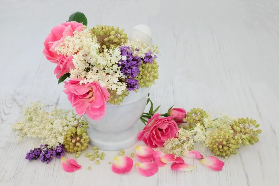 Suitable Gifting Occasions for Angelica Flowers