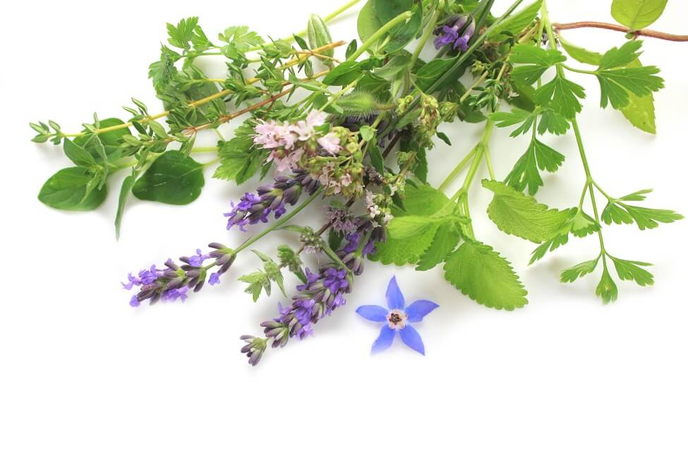 Suitable Gifting Occasions for Borage Flowers