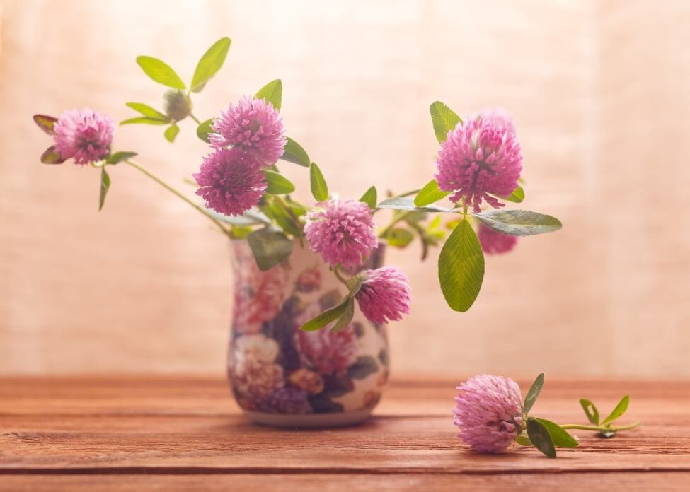 Suitable Gifting Occasions for Clover Flowers