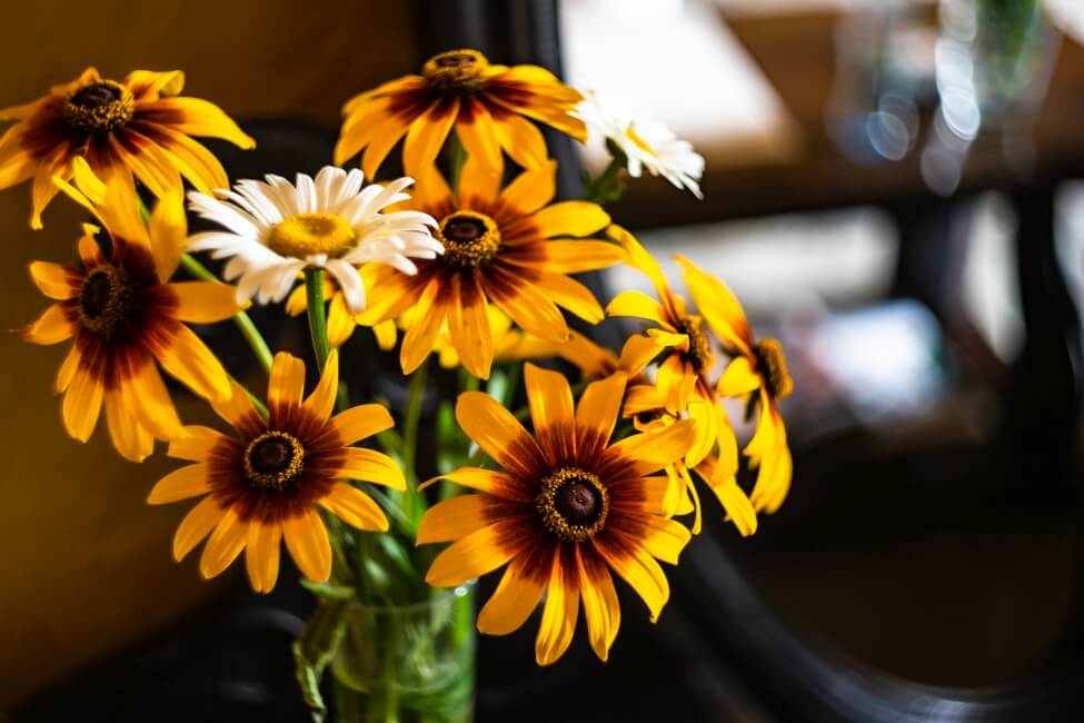 Suitable Gifting Occasions for Coreopsis Flowers