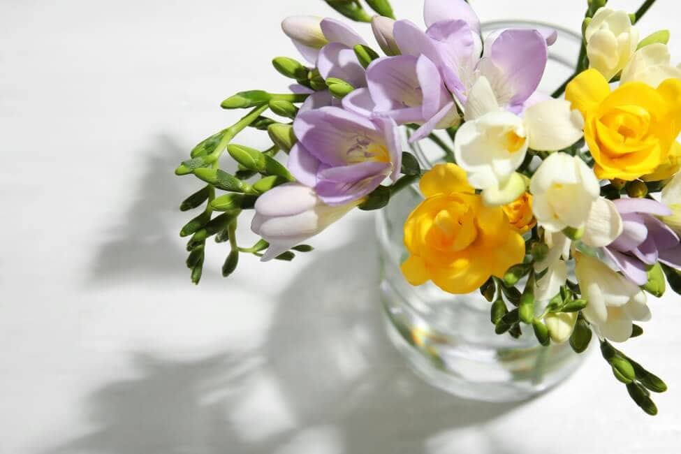 Suitable Gifting Occasions for Freesia Flowers