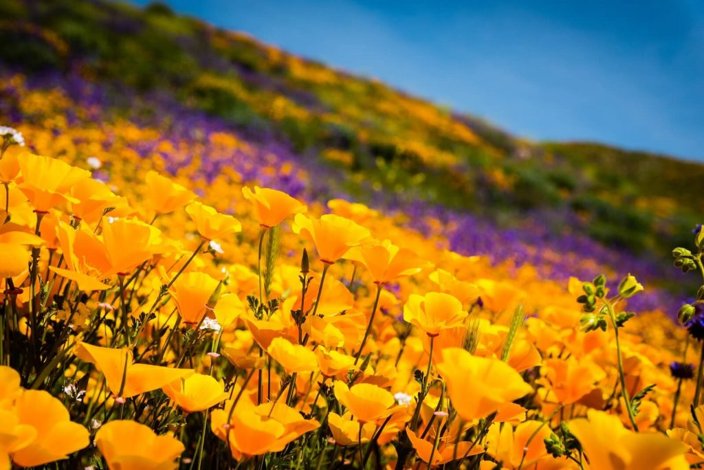 The Best California Flower Delivery Services