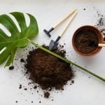 The Best Soil Mix for Monstera Plants (Essential Tips and Considerations)