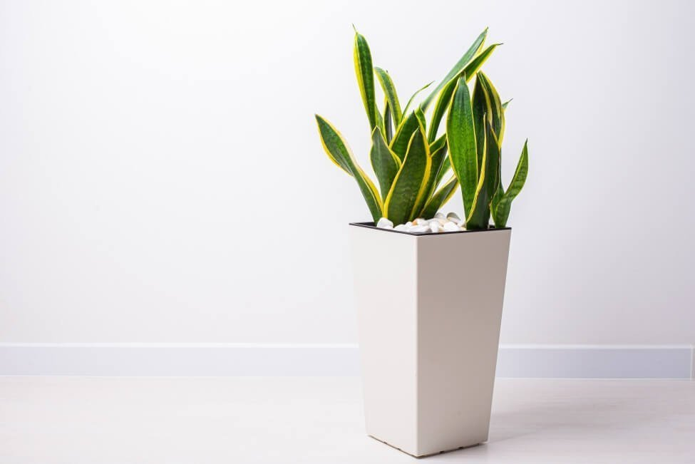 The Container Size and Type + Plant Size