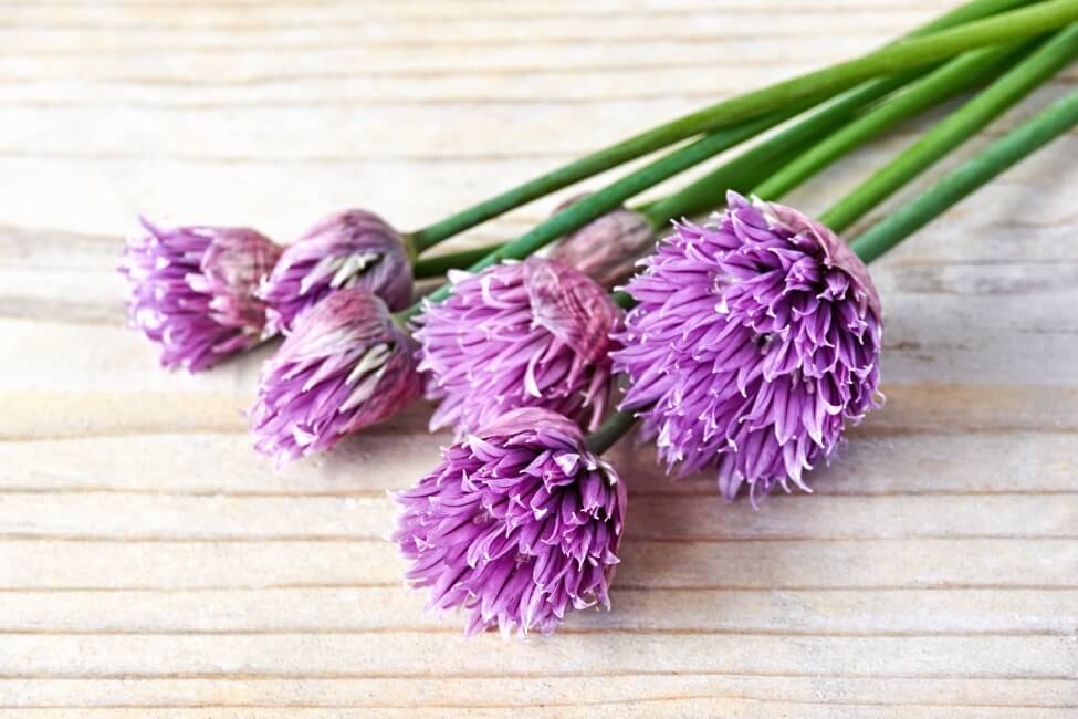 Uses and Benefits of Allium Flowers