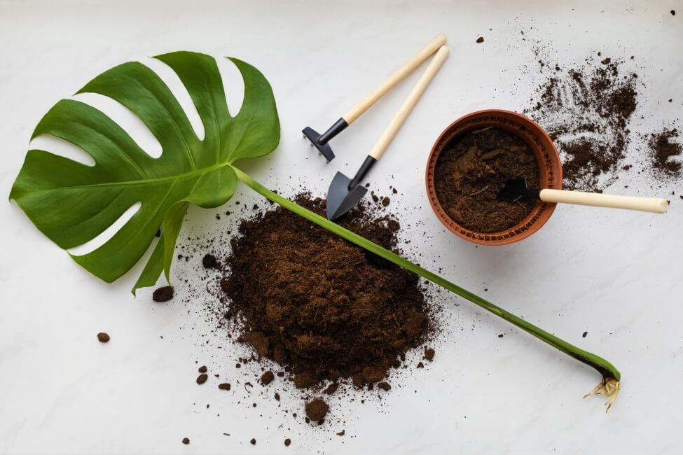 What's the Best Soil Mix for Monstera Plants