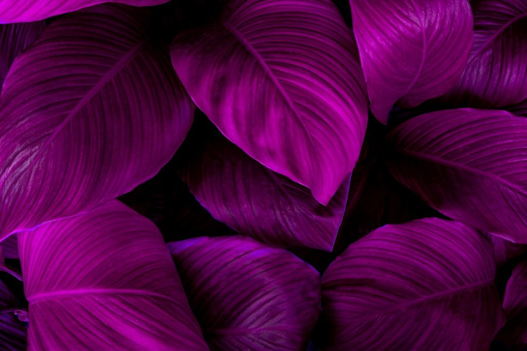 20 Best Purple House Plants (Types and Growing Tips)