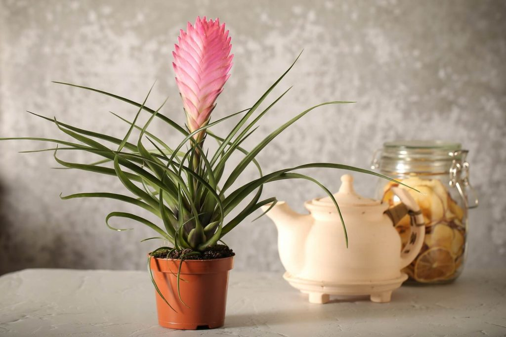 25 Best Pink Houseplants for the Home or Office