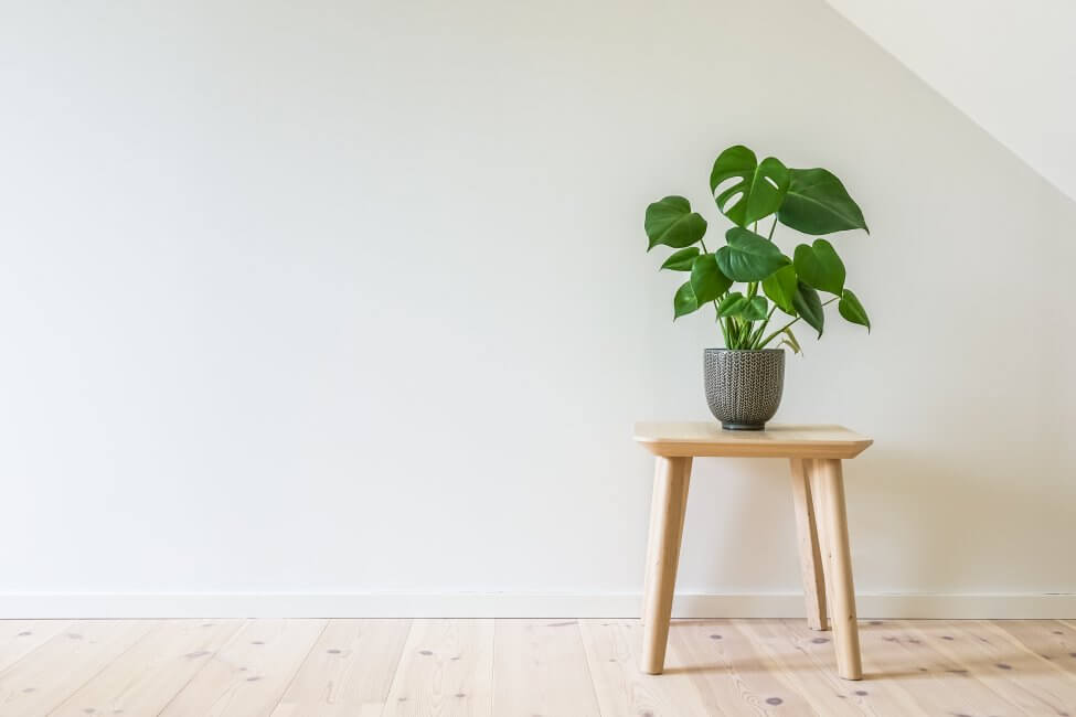 Do all Monstera Plants typically need the same light exposure