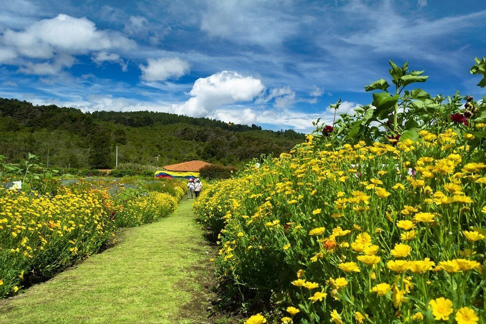 Flower Farms in Colombia