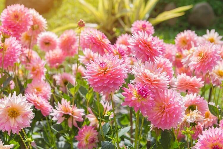 Flower Guides