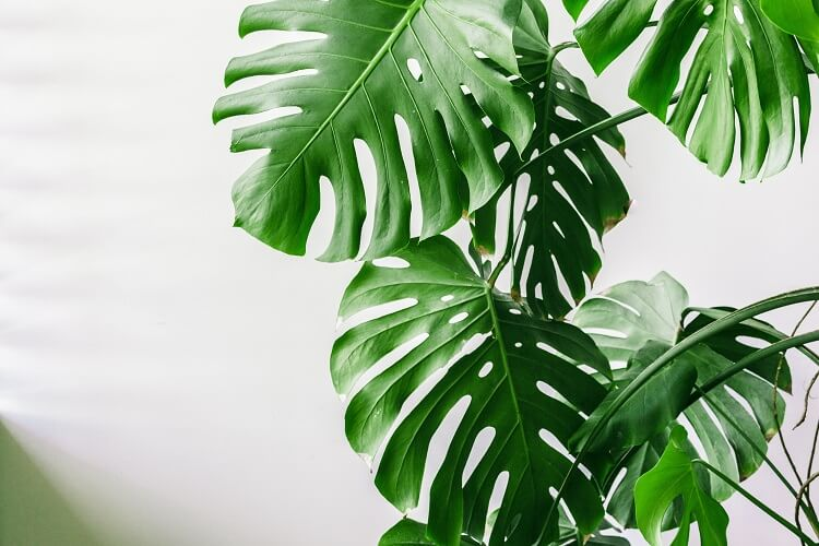 House Plant Guides